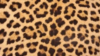 Virtual Safari: Big Cats Class