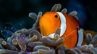 Under The Sea: Ocean Explorations Class