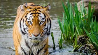 Safari: Studying Big Cats Class