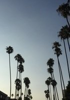 A photo of Amyre, a tutor from The University of Texas at Arlington
